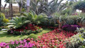 مصر: معرض زهور الربيع الـ 88 أول مارس بحديقة الأورمان النباتية